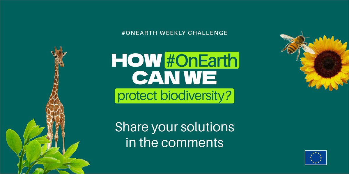Week 3 - Challenge