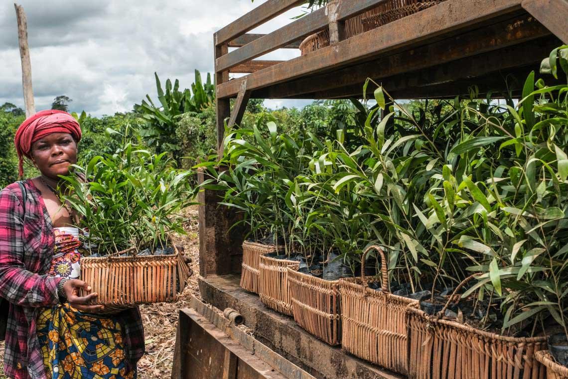 An electrifying future: Landscape restoration creates green jobs in the Democratic Republic of Congo