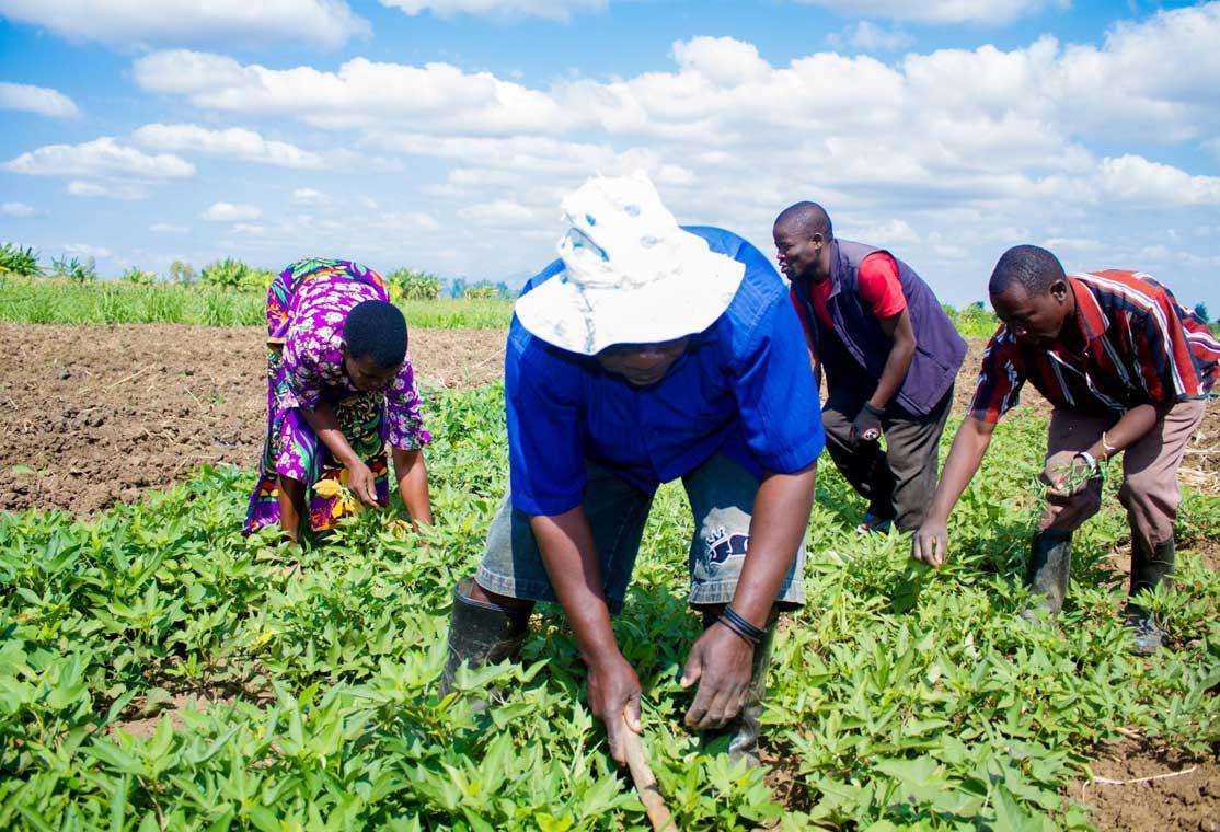 Malawi: farmer field schools empower farmers to fight climate change
